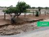 Des averses enregistrées auHodh Charghi et dans l'Assaba