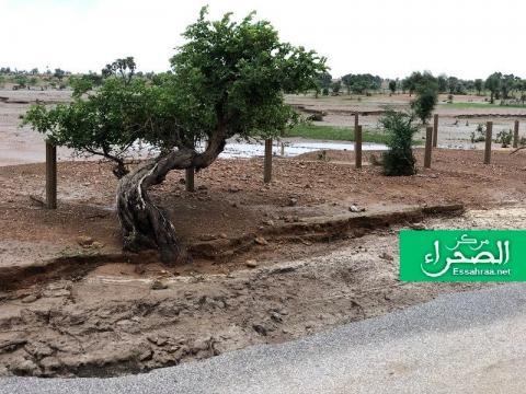 أمطار سابقة بموريتانيا (ارشيف - الصحراء)