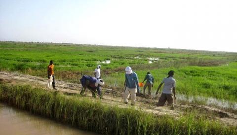 حقول زراعية قرب مدينة روصو (ارشيف - انترنت)