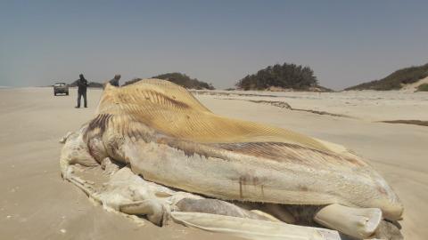 المصدر: المعهد الموريتاني لبحوث المحيطات والصيد