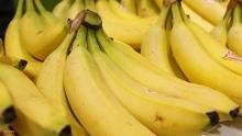 تناول الموز بعد التمرين الرياضي يساعد في تسريع الشفاء العضلي
