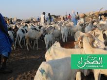 سوق المواشي في العاصمة نواكشوط – (المصدر: الصحراء)